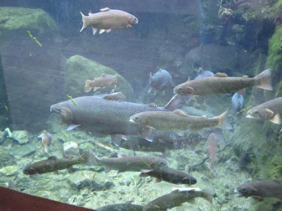 Cheyenne Mountain Zoo: IMG_1106