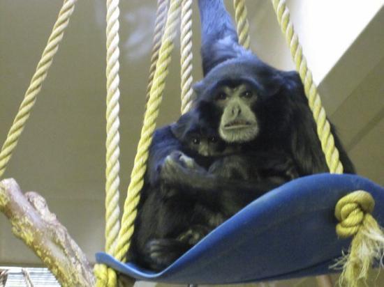Cheyenne Mountain Zoo: IMG_1222
