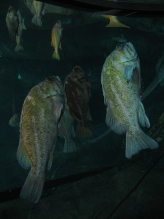 Oregon Coast Aquarium: Rock fish tank...