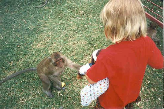 Hua Hin, Thailand: monkey tryes to steal Marins lifelong freind Bóbó the monkey