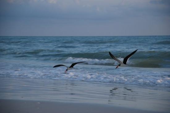 جزيرة ماركو, فلوريدا: Nature calls