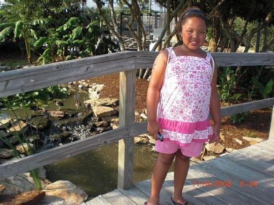 North Myrtle Beach, SC: At Alligator Adventure