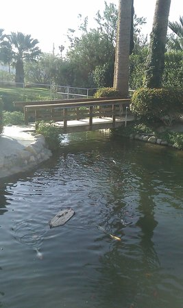 Desert Hot Springs, Californien: Huge Waterfall, Koi and Turtle pond