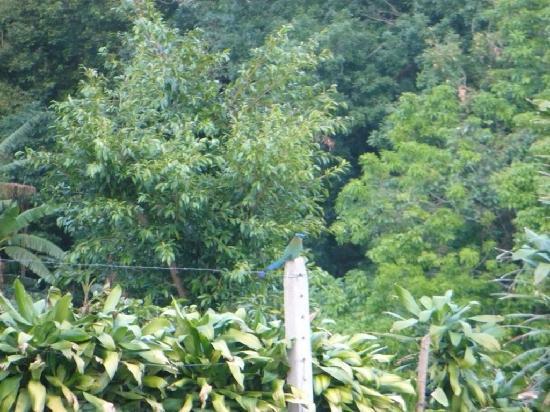 Hotel Mango Valley: Mot Mot