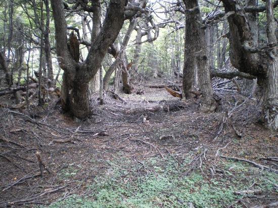 Hostal Akainij : The enchanted forest