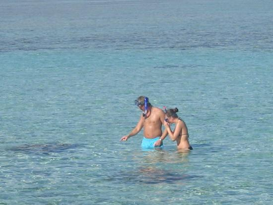 Royal Albatros Moderna Sharm el-Sheikh: lovely warm sea