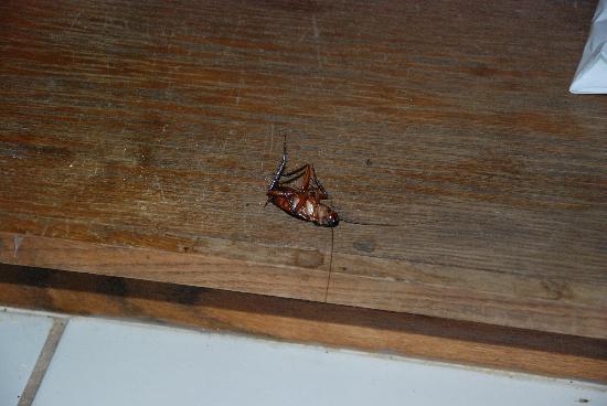 Pono Kai Resort: Dead roach.