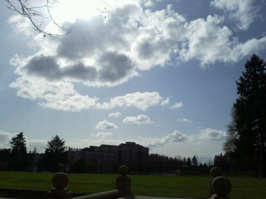 Downtown Park: Bellevue downtown park
