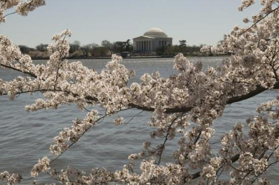 Jefferson Memorial in the background