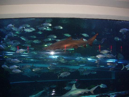 Golden Nugget Hotel & Casino: The aquarium has a water slide that runs throught it!