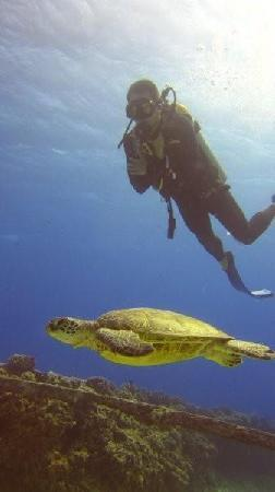 Oahu Diving: One of many, many green sea turtles we saw