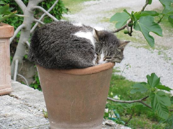 Agriturismo Il Molinello: the cats of Il Molinello