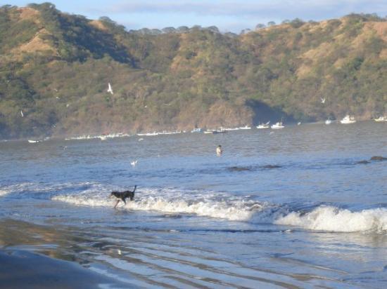 Playas del Coco Photo