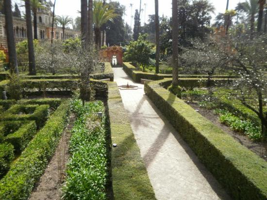 Jardin del laberinto de los reales alcazares picture of for Jardin laberinto
