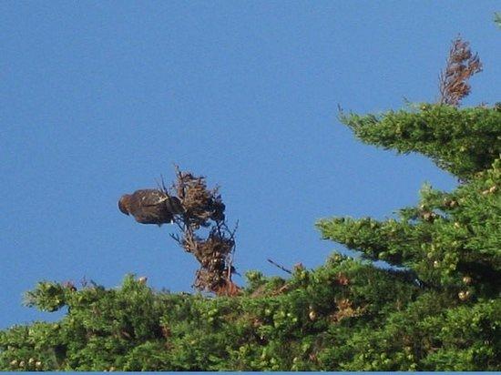Long Beach Ca United States My Neighbor S Tree
