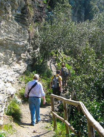 بونتا ميسكو: Hiking through olive tree groves.