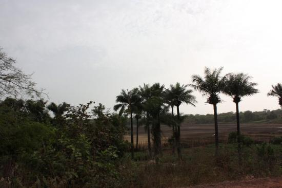 Bissau صورة فوتوغرافية