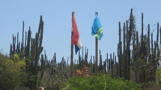 Cunucu Arubiano: The Flags!