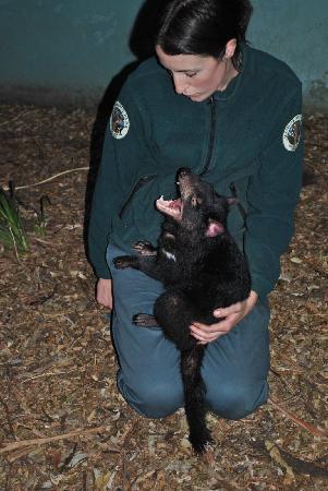 Brighton, Australia: Staff member Petra and one of their Tasmanian Devils