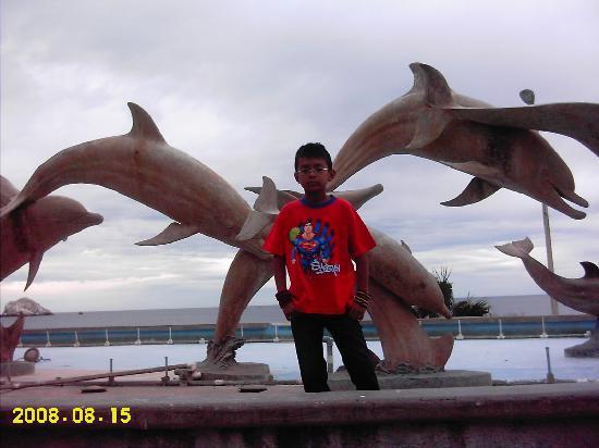 Hotel De Cima: Los delfines