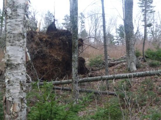 Римоуски, Канада: D'après la théorie sur la survie en forêt, voici les deadlines : - 3min avant d'avoir de l'oxyg