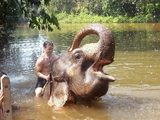 Candolim, India: Elephant wash