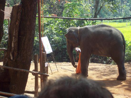 Candolim, Indien: baby elephant painting
