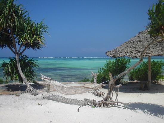 The Zanzibari : A great place to read a book
