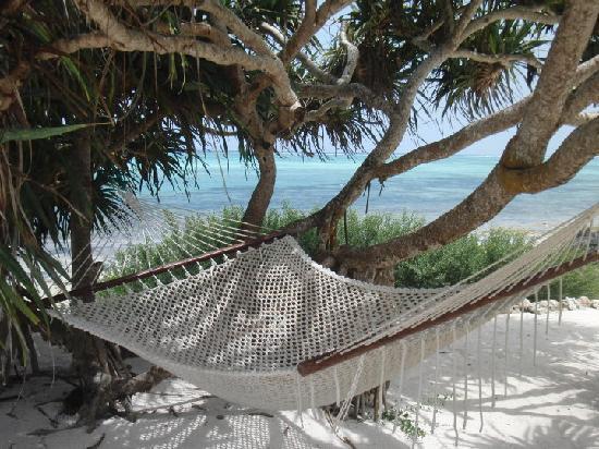 The Zanzibari : My favorite place of the day