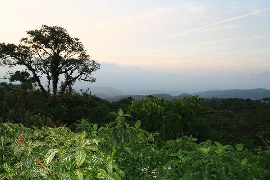 Villa Blanca Cloud Forest Hotel and Nature Reserve: View from the top