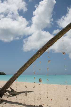 Cades Bay, Antigua: the nest