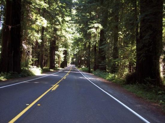Fortuna, Kalifornien: The Great Redwood Highway