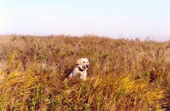 Medina, North Dakota: Enjoying the view on a duck hunt in North Dakota.