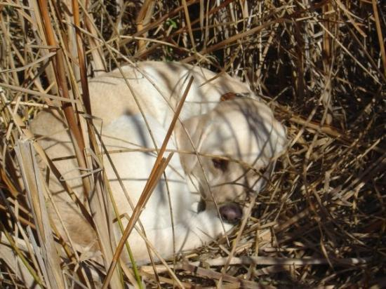 Medina, ND: Sleeping on the job... she has started to mello with age which is good and bad