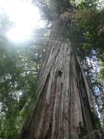Esquel, Αργεντινή: 56 metros de altura
