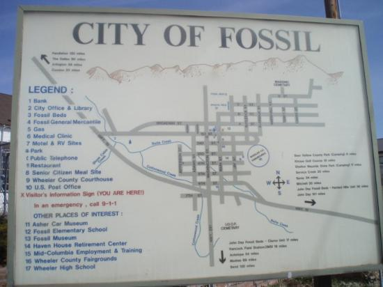 Fossil Photo