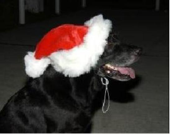 Diego Garcia: Jake, the island mascot, at Christmas.