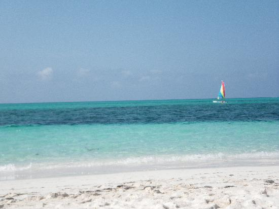 Gansevoort Turks + Caicos : the beach - nice but dark seagrass ruined the water