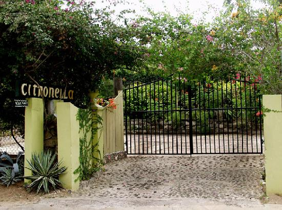 Citronella: Our New Gate