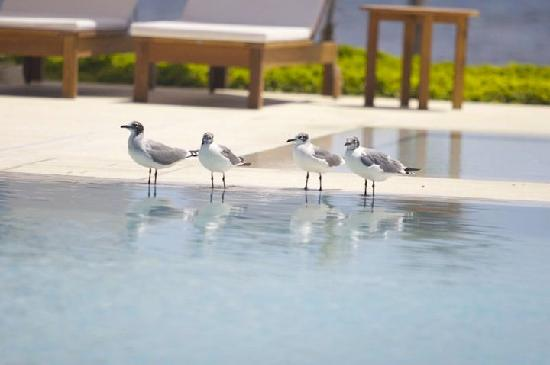 Hotel Paracas, a Luxury Collection Resort: Vista gaviotas piscina familiar