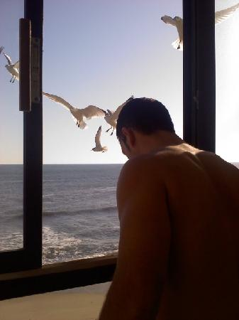 Sea Ranch Resort : Feeding the seagulls from our room