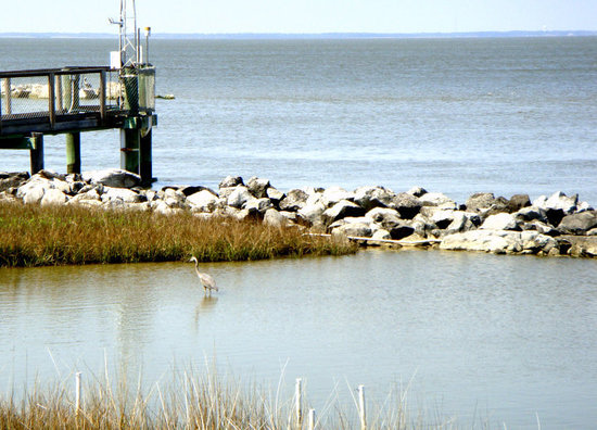 Dauphin Island Sea Lab Estuarium