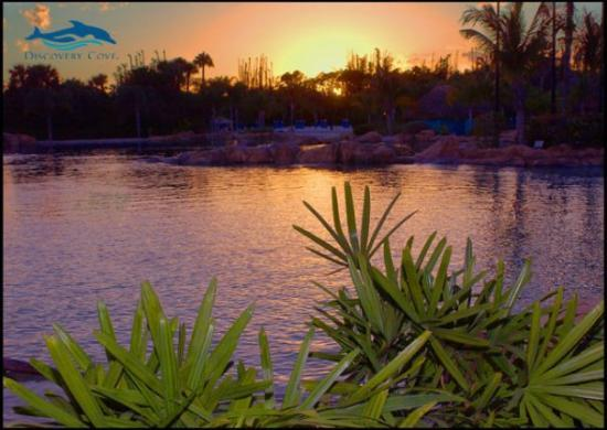 Discovery Cove: beautiful ending!