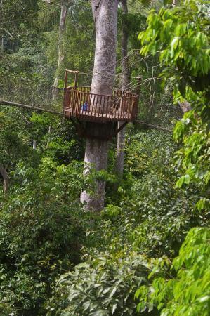 Kakum National Park: Canape walk