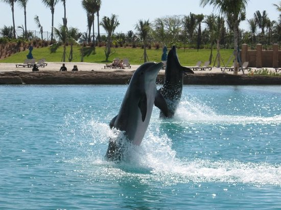 Paradise Island, New Providence Island: Dolphins are such beautiful creatures!