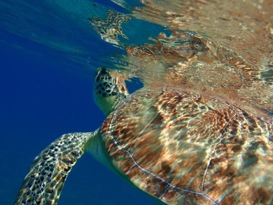 Good Day Charters: turtle breathing
