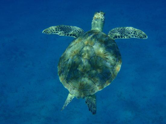 Good Day Charters : turtle in dappled sun