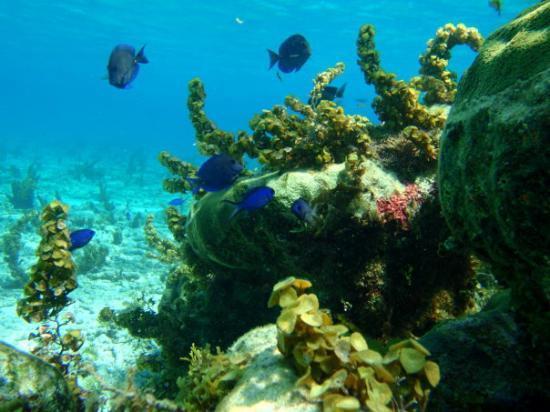 Providencia Island Resmi