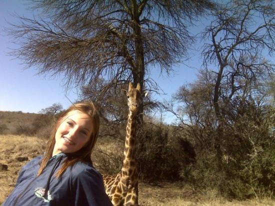 Harare, Zimbabwe: a giraffe