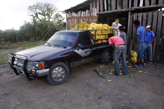 Тегусигальпа, Гондурас: A truck of Guatemalan bananas being imported into Honduras.